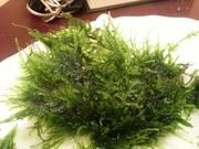 Мох бабл и др. растения. НАБОРЫ растений для запуска акваса