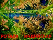 Ротала и др. растения -- НАБОРЫ растений для запуска