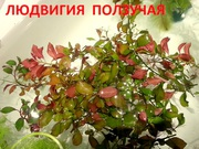 Людвигия ползучая и др. растения ------ НАБОРЫ растений для запуска