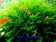 Мох крисмас и др. растения. НАБОРЫ растений для запуска акваса-