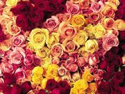 Интернет-магазин цветочной продукции BUKETROZ.BY