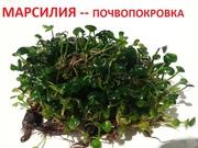 Элеохарис,  марсилия и др. растения - НАБОРЫ растений для запуска--