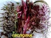 Могу собрать набор растений - для запуска или перезапуска акваса------