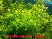 Жемчужная трава и др. растения -  НАБОРЫ растений для запуска- -