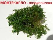 Монтекарло и др. растения -  НАБОРЫ растений для запуска акваса