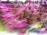 Лимнофила ароматика и др. растения --- НАБОРЫ растений для запуска- --