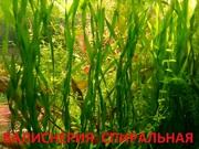 Эхинодорус везувий и др. растения -- НАБОРЫ растений для запуска-