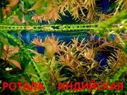 Ротала и др. растения -- НАБОРЫ растений для запуска акваса--