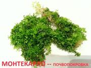 Монтекарло и др. растения - НАБОРЫ растений для запуска