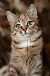 Табия - котенок в дар