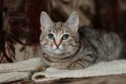 Мажена - котенок в дар