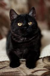 ЛИАМ котенок в дар