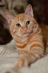Версус - котенок в дар