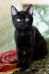 Элси - котенок в дар