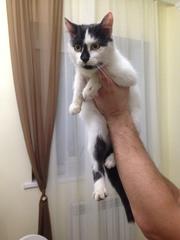 Кошка ищет новый дом