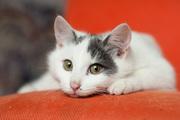 Котенок ЯНДЕКС - тот,  кого вы искали!