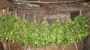 Веники березовые для Бани