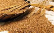 зерно фуражное ( пшеница)