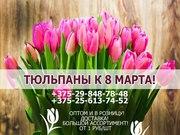 Закажи тюльпаны на 8 марта.