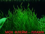 Мох флейм-пламя  и др. растения - НАБОРЫ растений для запуска--