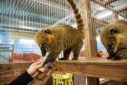 Продается единственный в городе контактных зоопарк c окупаемостью 4-6