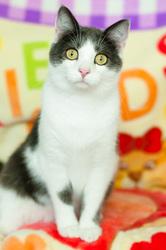 Умненький котенок Томас ищет дом