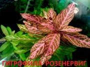 Гигрофила розенервиг. наборы растений для запуска. Почтой отправлю1