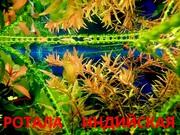 Ротала. наборы растений для запуска и перезапуска. Почтой отправлю