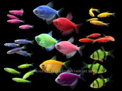 Рыбки гло ассорти