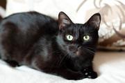Солли - кошка в дар