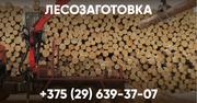 Лесозаготовка. Беларусь