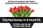 Продажа тюльпанов оптом и в розницу