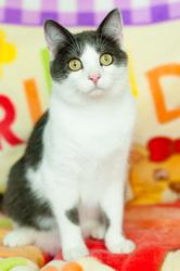 Хороший котик Томас ищет дом