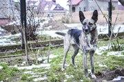 Люси —  ласковая собака в дар