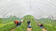 Разнорабочие на ферму в Западной Европе ,  в  Австрию