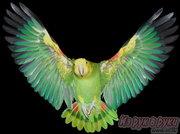 продам попугай большой, ЖАКО, КАКАДУ,  8-029-7624265