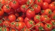 Польские помидоры оптом