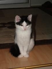 Кошечка 3 месяца в дар!