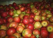 Яблоки белорусские продаём. Калиброванное,  отличного качества